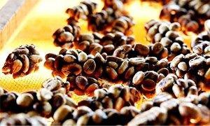 caffe 300x180