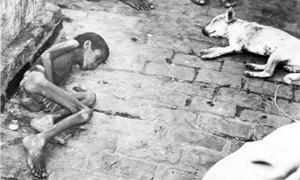 carestia Bengala300x180