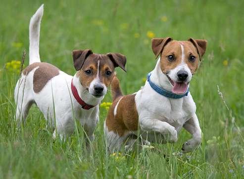 Cani da appartamento piccola taglia le razze perfette per