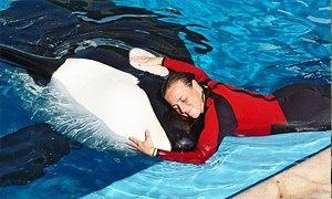 orca 300x180