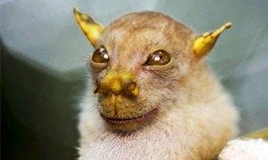 pipistrello Yoda300X180