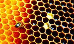 Honeycomb-300X180