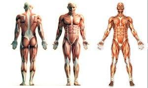 corpo-umano-300X180