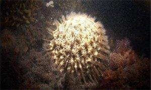 spugna-antartica-300x180