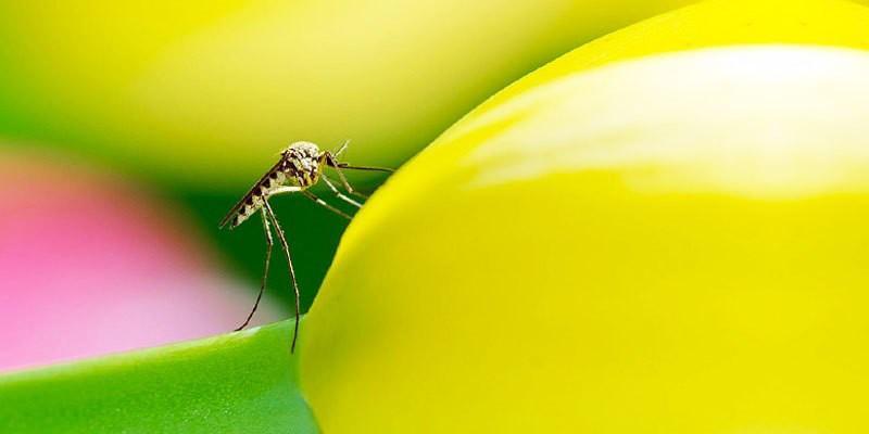 zanzara3