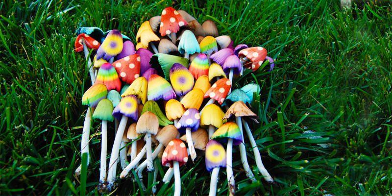 Funghi allucinogeni italiani – Effetti sul corpo umano
