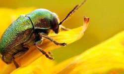 insetti supereroi3