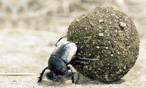 scarabeo-300X180