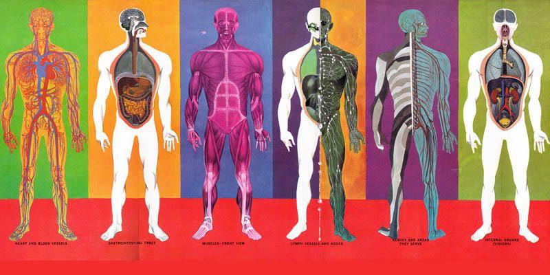 Anatomia2-800x400