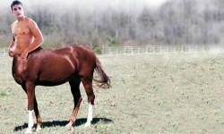 Centauro2-800x400
