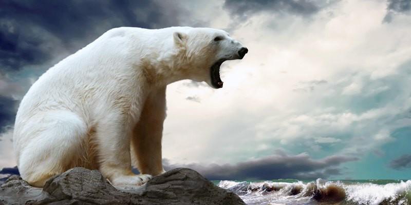 orso polare3