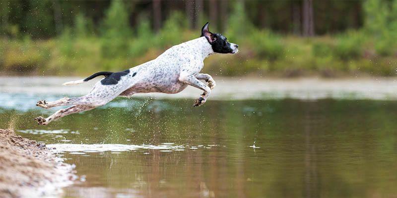 Cani da caccia 3 800x400