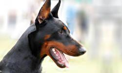 cane da guardia 800x400