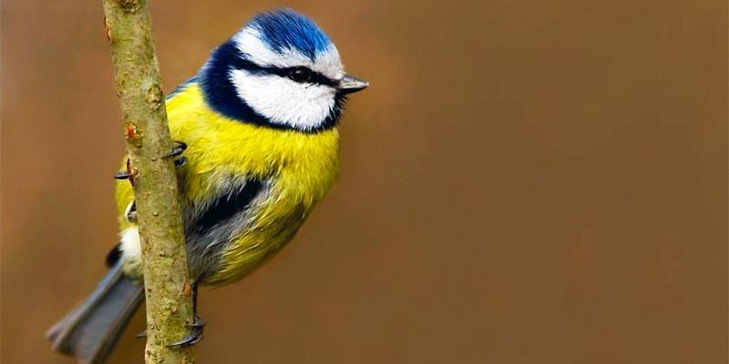 5 uccelli coloratissimi nidificanti in Italia 2-800x400