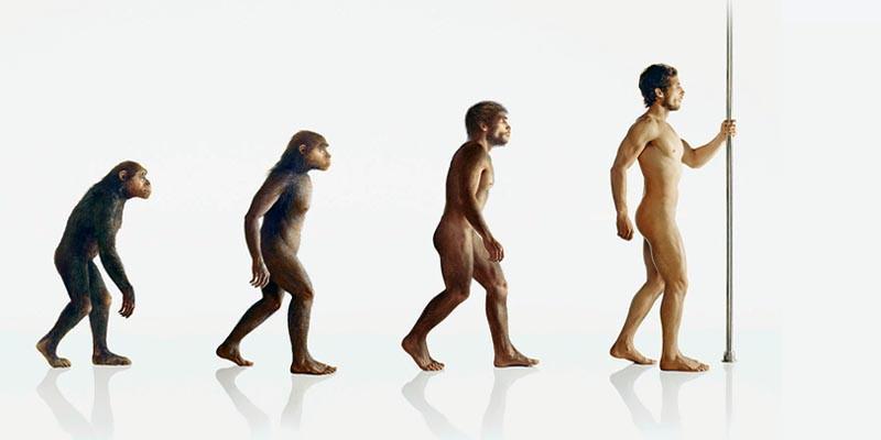 Evoluzione 2 800x400