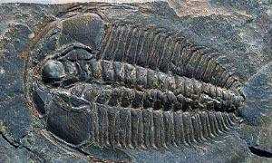 Luoghi fossiliferi-Burgess 300x180