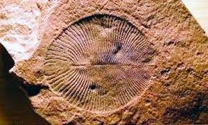Luoghi fossiliferi-Ediacara 300x180