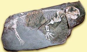 Luoghi fossiliferi-Karroo 300x180