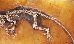 Luoghi fossiliferi-dinosauro 800x400