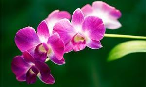 Piante da interno - Orchidea  300x180