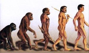 evoluzione di Darwin 300x180