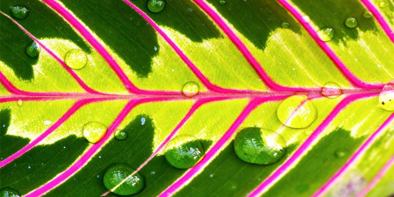 5 bellissime piante Brasiliane per il vostro appartamento 1-800x400