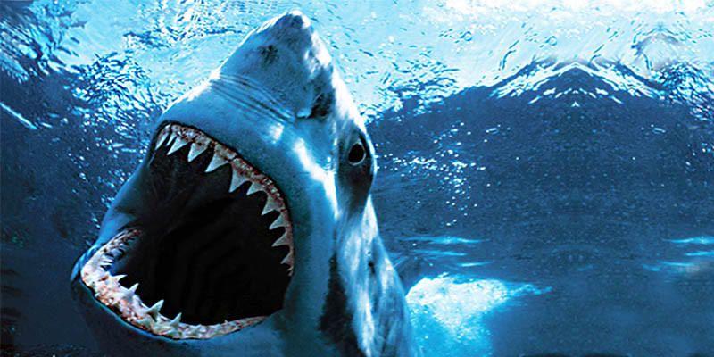 5 squali pericolosissimi per l'uomo 3-800x400
