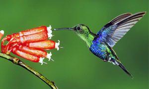 Animali originali-Curiosità sugli uccelli-300x180