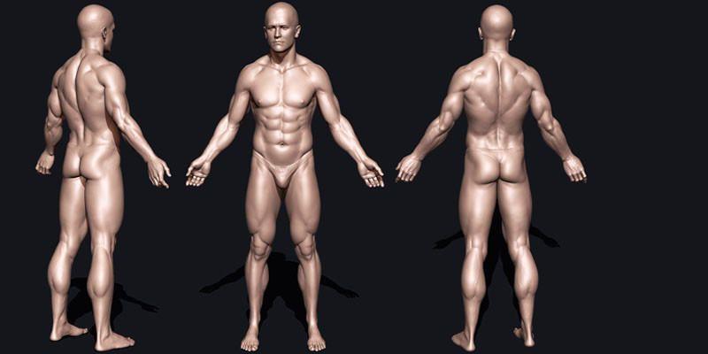 Corpo umano- 5 fatti incredibili ma veri 1-800x400