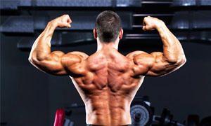 Corpo umano-i muscoli-300x180