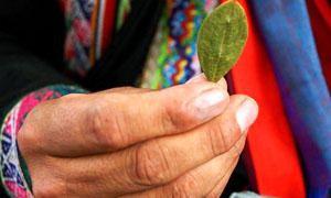 Cultura Incas-uso di coca-300x180