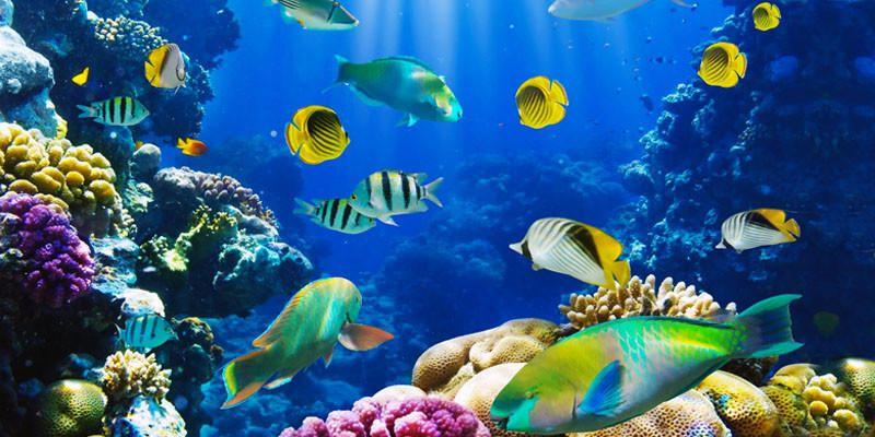 Pesci d 39 acquario come farli convivere in armonia for Acquario per pesci