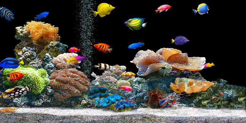 Come allestire un acquario 1-800x400