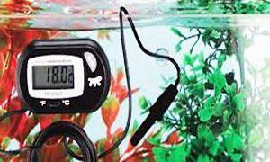 Come allestire un acquario-Composizione dell'acqua-300x180