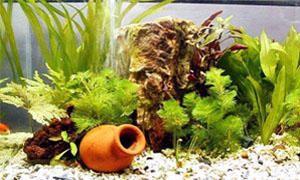 Come allestire un acquario-Ghiaia, sabbia e materiali ornamentali-300x180