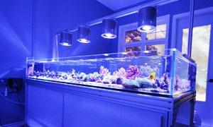 Come allestire un acquario-Riscaldatori e illuminazione dell'acquario-300x180