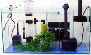 Come allestire un acquario-filtraggio-300x180