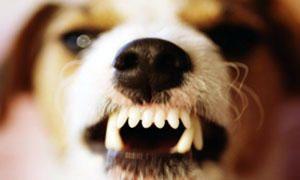 Un cane o un gatto potrebbe sbranare il padrone che muore lasciandoli soli e senza cibo-300x180