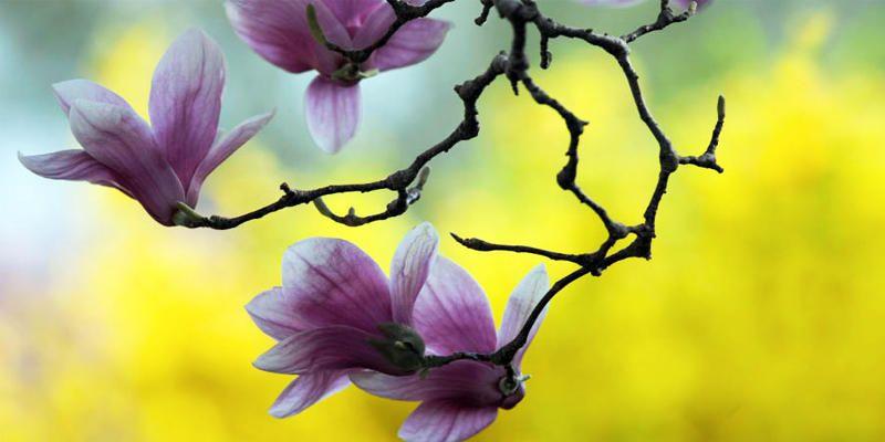 I messaggi segreti dei fiori - Il giardino dei fiori segreti ...