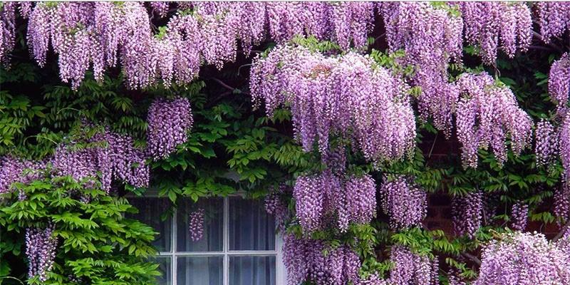 5 arbusti meravigliosi per il vostro giardino 5-800x400