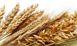 5 cereali 5-800x400