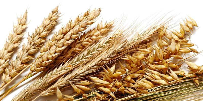 5 Cereali Fondamentali Per Il Tuo Benessere Best5 It