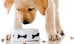 Alimentazione del cane: tutto quello che devi sapere