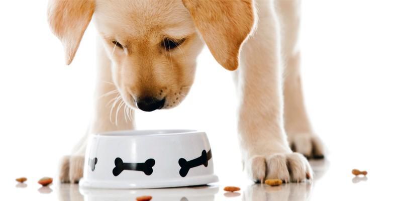 Alimentazione Del Cane Tutto Quello Che Devi Sapere Best5it