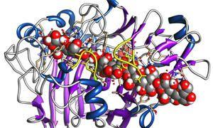 Che cosa sono gli enzimi-300x180