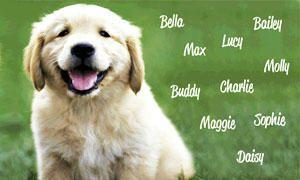 nomi per il cane-scelta tra 600 nomi-300x180