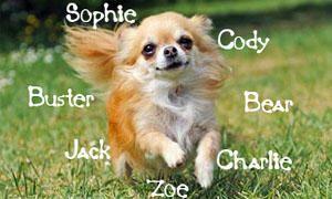 Nomi Per Cani Oltre 2000 Nomi Tra Cui Scegliere Quello Giusto
