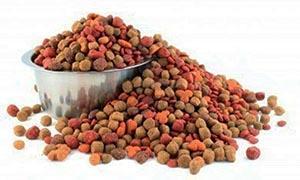 cane-alimentazione-cibo-secco-300x180