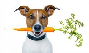 cane-alimentazione-crescita-300x180