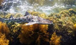 5 squali bellissimi ed innoqui per l'uomo 4-800x400